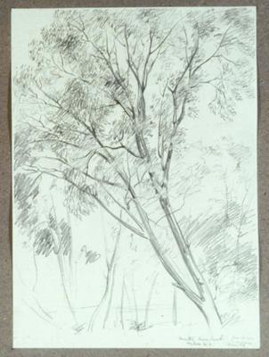 Vivian Smith; Untitled (Trees, Matai River Bank); 27 Jan 1914; 1988/27/72
