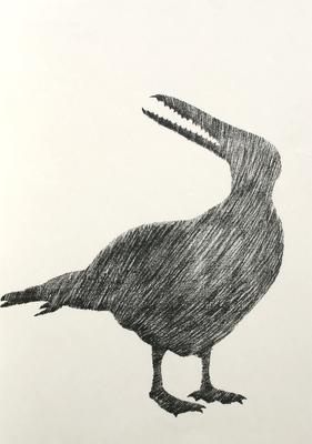 Stirtons false-toothed Pelican