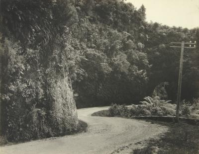 Untitled (road bend and tunnel)