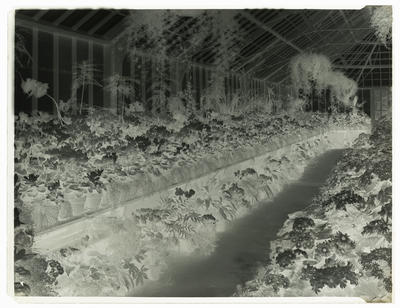 Black and white negative of a glass house interior
