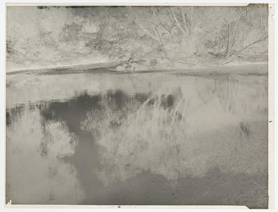Black and white negative of trees reflected in a stream (horizontal format)