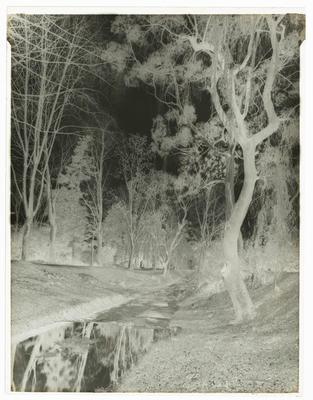 Black and white negative of stream (upright)