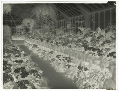Frank Denton; Black and white negative of Panorama of Winter Gardens (one of two) [this is the negative for 1996/11/13]; L1996/11/60