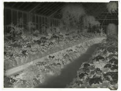 Frank Denton; Black and white negative of Panorama of Winter Gardens (two of two) [this is the negative for 1996/11/13]; L1996/11/61