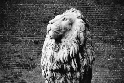 Peter Peryer; The Lion, Copenhagen; 1997; 1998/15/3