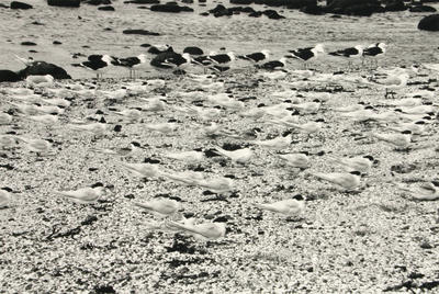 Birds, Chatham Islands.