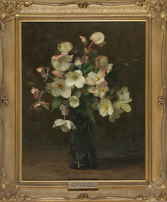 Alfred Hayward; Begonias; Unknown; 1929/5/1