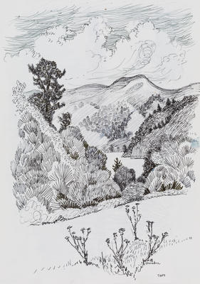 Untitled (Taupo trees and hills study)