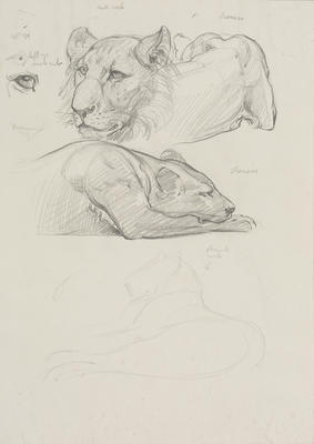 Vivian Smith; Untitled (Lioness and cubs); Feb 1913-Jun 1914; 1988/27/392