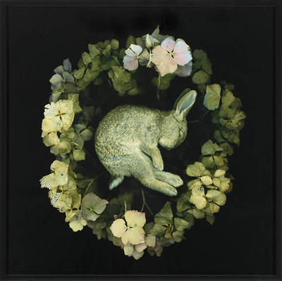 Dead Hydrangea and Bunny