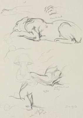Vivian Smith; Untitled (Female lion cub); Dec 1913; 1988/27/393