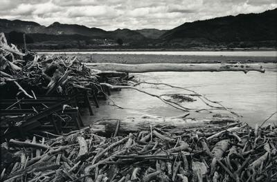 Human generated driftwood dam, Motu River