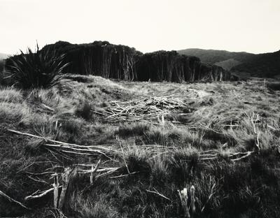 Firebreak in Manuka forest from Scott Burn, Stewart Island.