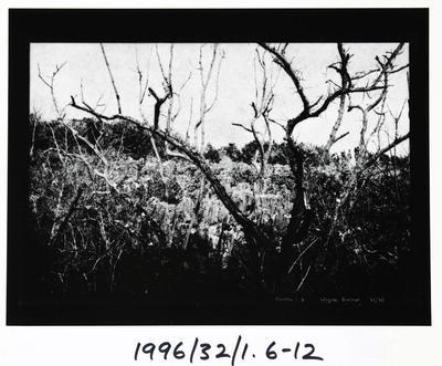 Wayne Barrar; Nauru:6; Circa 1992; 1996/32/1.6
