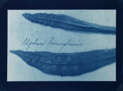 Wayne Barrar; Mrs Armstrong's Album #2; 1999; 2000/11/3