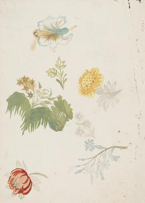Floral Studies