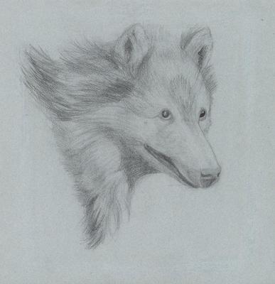 Untitled (Fox Like Creature)