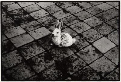 Peter Peryer; Rabbit; 1982; 1982/42/1