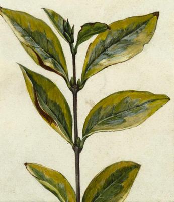 Untitled (Plant cutting)