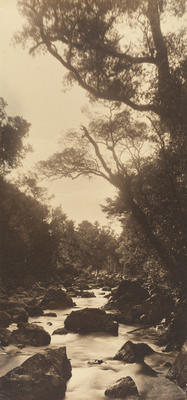 The Haunt of the Tui (Stream at Bay of Islands)