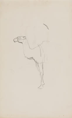 Untitled (Camel study)