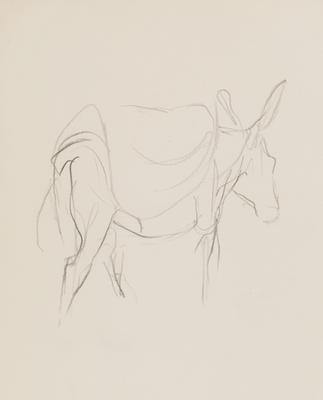 Untitled (Donkey)