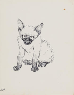 Untitled (Siamese kitten)