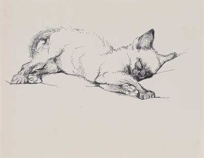 Untitled (Siamese kitten)
