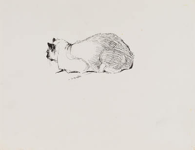 Untitled (Siamese cat)
