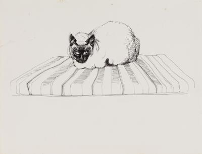 Untitled (Siamese cat)