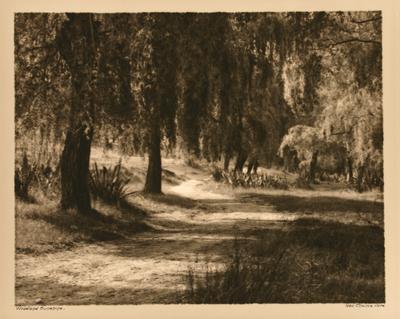 George Chance; Woodland Sunshine; Circa 1900-1963; 1965/1/47