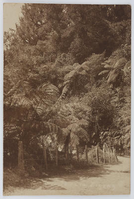 """Uncle Arthur; Postcard of a bush walk. Possibly titled """"Zigzag"""" from Uncle Arthur to Edith Collier.; 1926; A2015/1/116"""