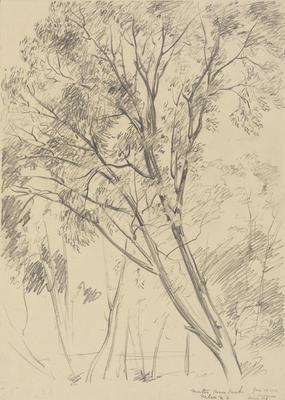 Untitled (Trees, Matai River Bank)