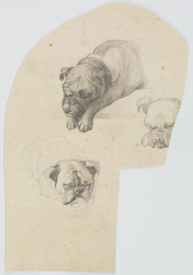 Untitled (Dog studies)