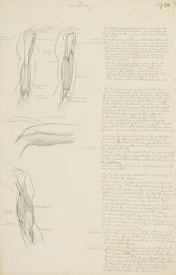 Vivian Smith; Untitled (Anatomical drawings); 1904; 1988/27/533