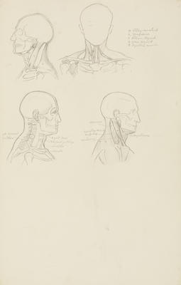 Vivian Smith; Untitled (Anatomical drawings); 1904?; 1988/27/549