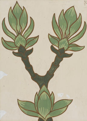 Vivian Smith; Untitled (Hydrangea); Jun 1908; 1988/27/606