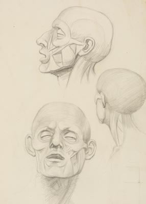 Vivian Smith; Untitled (Anatomical drawings); 1904?; 1988/27/554