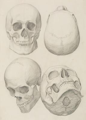 Vivian Smith; Untitled (Anatomical drawings); 1904?; 1988/27/555