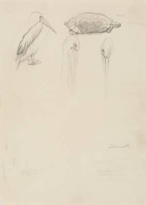 Untitled (Pelicans and turtle)