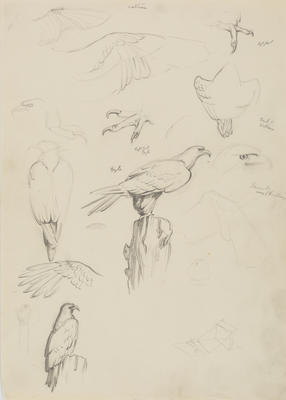 Untitled (Vulture and eagle)