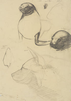 Vivian Smith; Untitled (Seal and hyena); Jul 1915; 1988/27/471