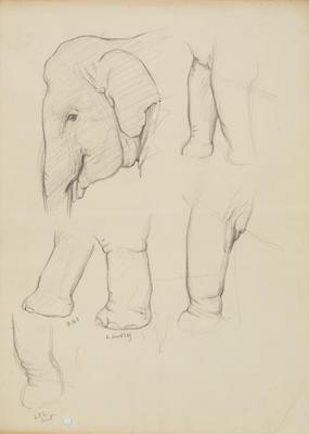 Vivian Smith; Untitled (Elephant); 1913-1917?; 1988/27/479