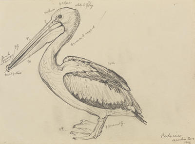 Untitled (Pelican)