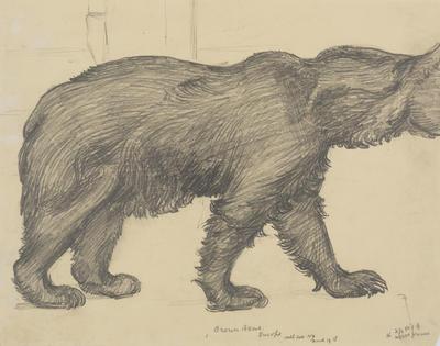 Vivian Smith; Untitled (Brown bear); Mar 1915; 1988/27/466