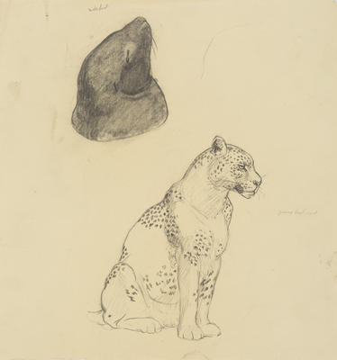 Untitled (Seal and leopard)