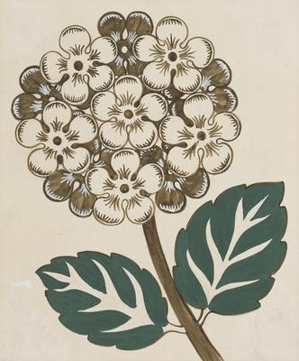 Untitled (Hydrangea)