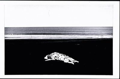 Dalmation, Waitotara Beach 1985