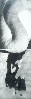 "Song .......without words (from the series) - diptych ""Swan"""