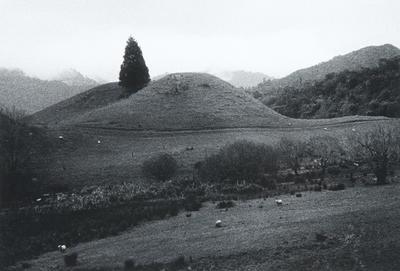 Pipiriki, 1981